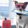 Köpeğiniz ile Yolculuk